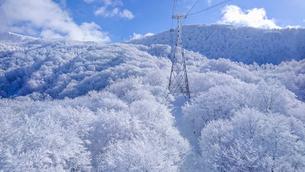 山形蔵王の霧氷の写真素材 [FYI01796644]