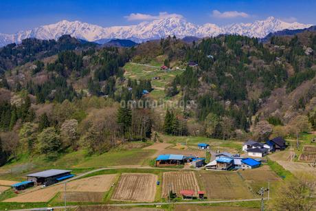 小川村の春の写真素材 [FYI01796654]