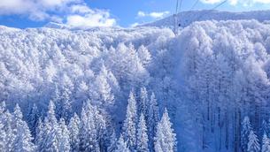 山形蔵王の霧氷の写真素材 [FYI01796718]