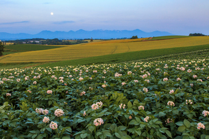じゃがいも畑の向こうに十勝岳連邦と月の写真素材 [FYI01796728]