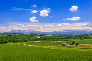 初夏の旭岳と山麓の写真素材 [FYI01796771]
