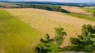 牧草ロールの転がる丘と一本の木の写真素材 [FYI01796822]
