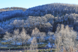 朝日に輝く霧氷の木々の写真素材 [FYI01796849]