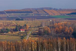 北瑛の高台から望む美瑛の丘の写真素材 [FYI01796853]