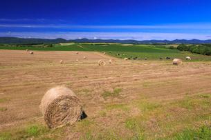 麦わらロール転がる美瑛の丘の写真素材 [FYI01796855]