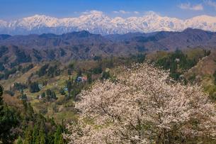 小川村の春の写真素材 [FYI01796856]