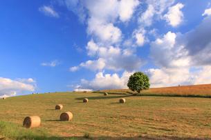 麦わらロールと一本の木の写真素材 [FYI01796870]
