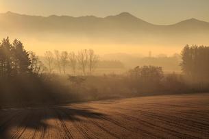 斜光に映える晩秋の丘と遠くにサイロの写真素材 [FYI01796922]