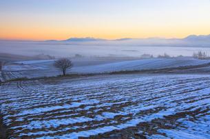 雲海の夜明けに佇む一本の木の写真素材 [FYI01796931]
