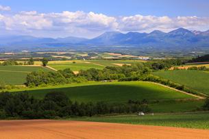 留辺蘂の高台から望む美瑛の丘の写真素材 [FYI01796957]