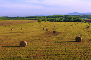 麦わらロールの転がる草原の写真素材 [FYI01796988]