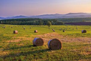 麦わらロールの転がる草原の写真素材 [FYI01797001]