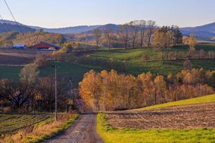 紅葉の丘へ続く道の写真素材 [FYI01797012]