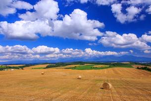 麦わらロールの転がる丘の写真素材 [FYI01797042]