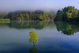 白川湖の水没林の写真素材 [FYI01797060]