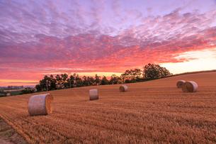朝焼けの空と麦わらロールの写真素材 [FYI01797072]