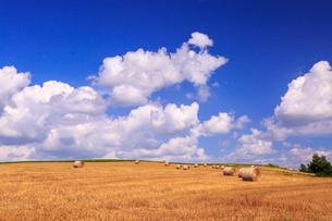 麦わらロール転がる美瑛の丘の写真素材 [FYI01797087]