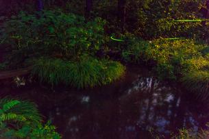 ホタル飛び交う池の写真素材 [FYI01797106]