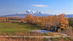 黄葉の防風林と斜里岳の写真素材 [FYI01797112]