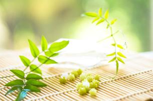 初夏の緑のコンペイ糖の写真素材 [FYI01797117]