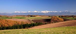 紅葉の美瑛の丘と十勝岳連峰の写真素材 [FYI01797151]