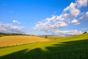 麦わらロール転がる美瑛の丘の写真素材 [FYI01797339]