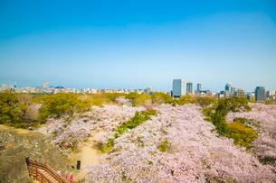 福岡城の桜の写真素材 [FYI01797474]