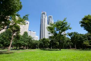 新宿中央公園より都庁を望むの写真素材 [FYI01797478]