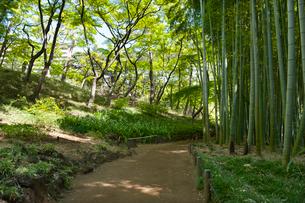 国分寺の殿ヶ谷戸庭園の竹林の写真素材 [FYI01797516]