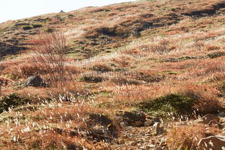 那須岳トレッキングの写真素材 [FYI01797572]