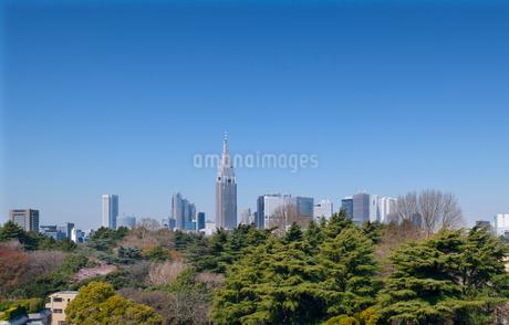 新宿御苑越しに新宿高層ビル群を望むの写真素材 [FYI01797611]