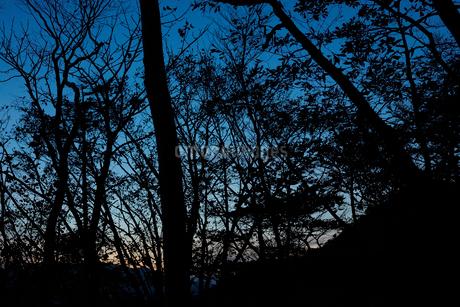 沼ッ原湿原トレッキングの写真素材 [FYI01797806]