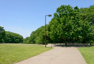 砧公園の緑の写真素材 [FYI01797809]