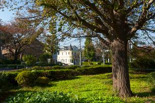 国立の大学通りの秋の風景の写真素材 [FYI01797812]