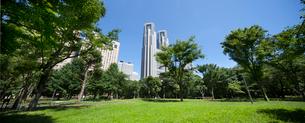 新宿中央公園より都庁を望むの写真素材 [FYI01797845]