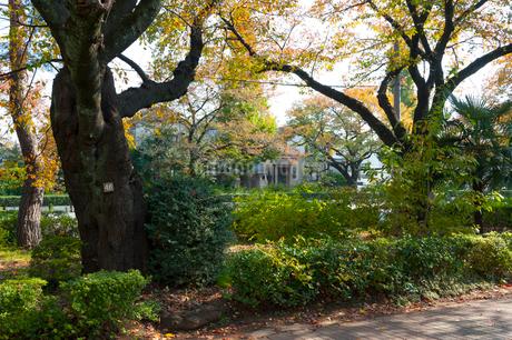 国立の大学通りの秋の風景の写真素材 [FYI01797965]