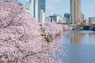 外濠公園の桜の写真素材 [FYI01797972]