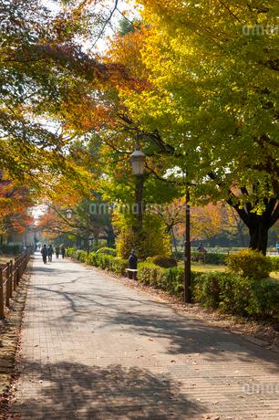 国立の大学通りの秋の風景の写真素材 [FYI01797981]
