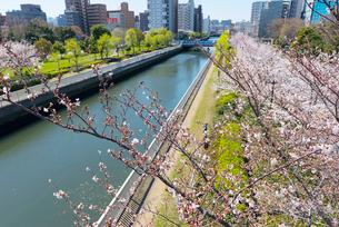 木場公園の桜の写真素材 [FYI01797987]