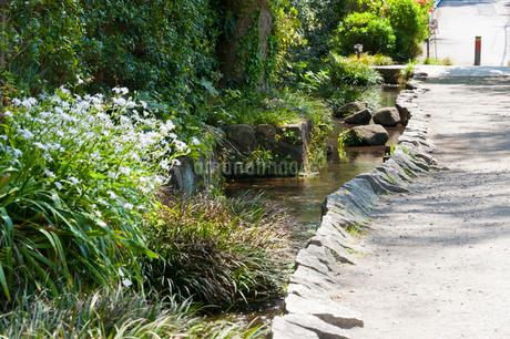 国分寺の真姿の池湧水群の写真素材 [FYI01798010]