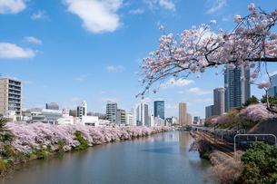 飯田橋の桜の写真素材 [FYI01798242]