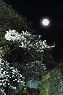 サクラのライトアップ夜景の写真素材 [FYI01798246]