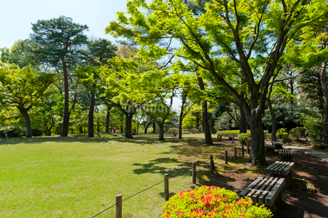 殿ケ谷戸庭園の写真素材 [FYI01798251]