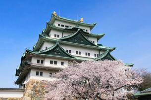 春の名古屋城・天守閣とサクラの写真素材 [FYI01798283]