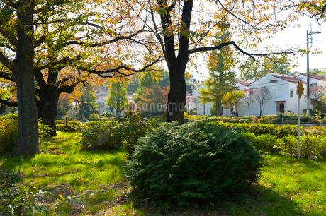 国立の大学通りの秋の風景の写真素材 [FYI01798310]