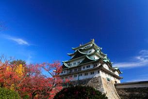 秋の名古屋城・天守閣と紅葉の写真素材 [FYI01798397]