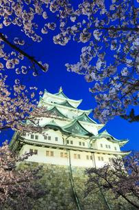 春の名古屋城・天守閣とサクラのライトアップ夜景の写真素材 [FYI01798409]