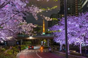 東京ミッドタウンの檜町公園の桜の夜景と東京タワーの写真素材 [FYI01798416]