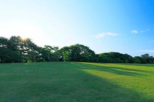 公園の芝生と木立に朝日の写真素材 [FYI01798564]