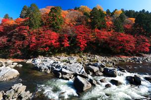 香嵐渓 巴川に飯盛山の紅葉の写真素材 [FYI01798592]